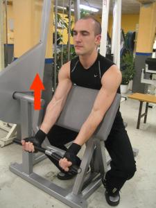 Scottcurls i maskin - Dra upp stången så långt du kan samtidigt som du stöttar överarmarna mot armstödet.